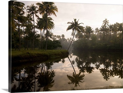 Sunrise And Palm Trees, Kerala, India