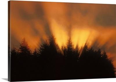 Sunrise Fog Trees Tongass Natl Forest Juneau Southeast Alaska Orange
