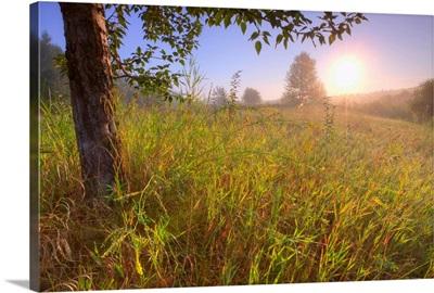 Sunrise On A Dew Covered Grassy Hill, North Of Edmonton, Alberta, Canada