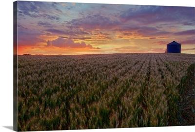 Sunrise Over A Barley Field With Grain Silo In Central Alberta, Canada