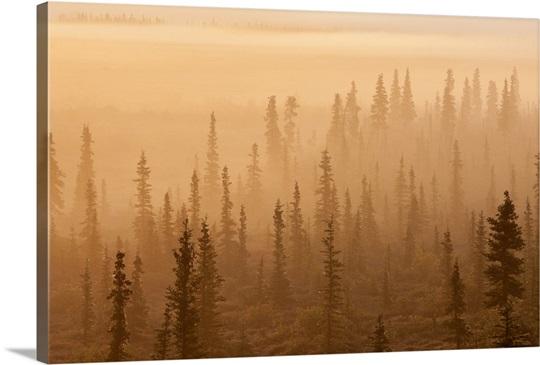 Sunrise over a foggy forest, Katmai National Park and Preserve, Southwest Alaska
