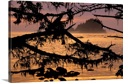 Sunset At Olympic National Park, Cape Alava, Washington State