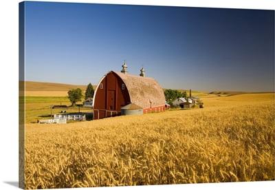 Sunset Barn And Wheat Field, Steptoe Butte, Washington