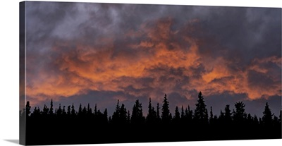 Sunset Illuminating The Clouds Above A Silhouetted Forest, Whitehorse, Yukon, Canada