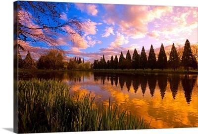 Sunset Reflection On A Pond, Portland, Oregon