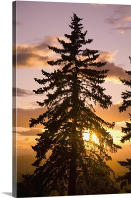 Sunset, Willamette Valley, Oregon, USA