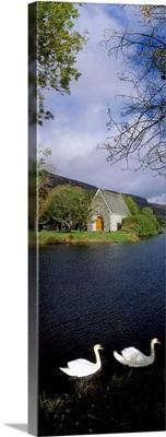 Swans near Chapel At Gougane Barra, County Cork, Ireland