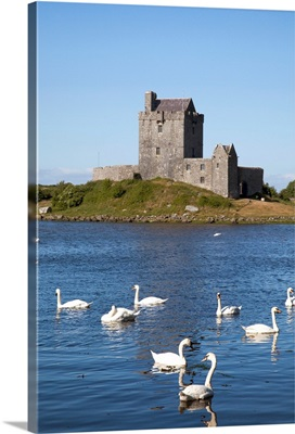 Swans On Water In Front Of Dunguaire Castle; Kinvarra, County Galway, Ireland