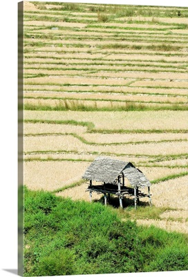 Thailand, Mae Sariang, Thatched Roof Shelters In Terraced Rice Paddies