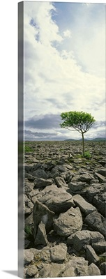 The Burren, On Kinvara Side, County Clare, Ireland