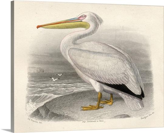 The Pelican Wall Art, Canvas Prints, Framed Prints, Wall Peels ...