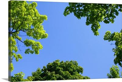 The Sky Through Trees