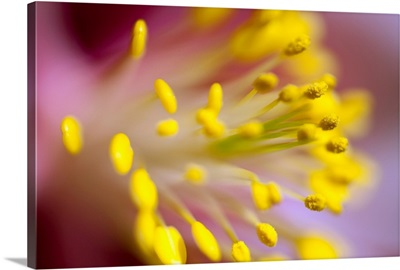 The Stamen Of A Flower