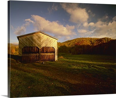 Tobacco barn in a rural Autumn setting with curing Burley tobacco hanging inside