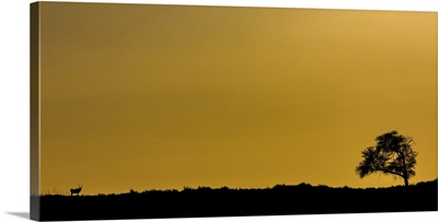 Tree And Antelope With A Golden Sky, Sossusvlei, Hardap Region, Namibia