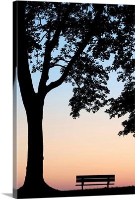 Tree And Bench Silhouette, Niagara-On-The-Lake, Ontario, Canada