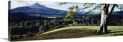 Tree In A Field, Great Sugar Loaf, County Wicklow, Republic Of Ireland