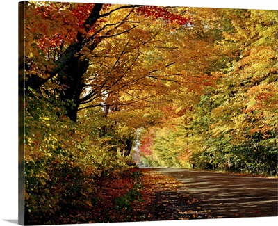 Tree-Lined Road In The Fall