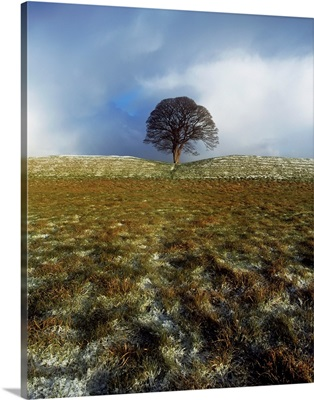 Tree On A Landscape, Giant's Ring, Belfast, Northern Ireland