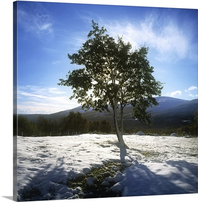Tree On A Snow Covered Landscape, Glencree, Republic Of Ireland