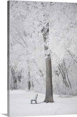 Trees And A Park Bench Covered In Snow, Winnipeg, Manitoba, Canada