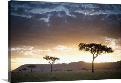 Trees And Animals Across An African Landscape At Sunset; Kenya, Africa