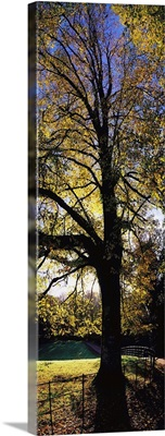 Trees During Autumn