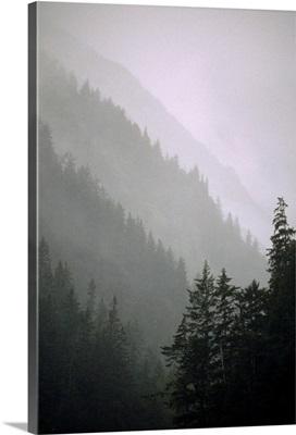 Trees in Fog I