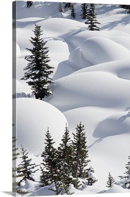 Trees In Snow Drifts At Lake Louise, Banff National Park, Alberta, Canada