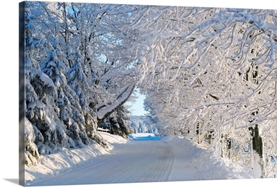 Trees Lining The Road In Winter; Quebec, Canada