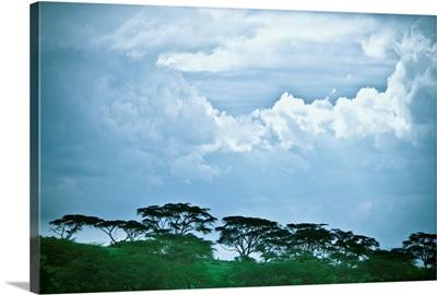 Trees Under A Cloudy Sky, Kenya