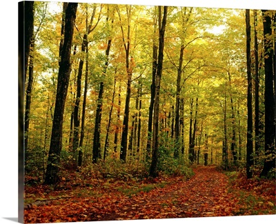 Trees With Autumn Leaves In The Forest