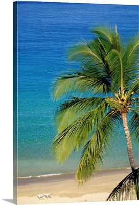 Tropical Beach With Palm Tree and Beach Chairs
