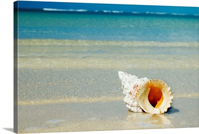 Tropical Seashell On The Beach With Gorgeous Clear Blue Ocean Behind