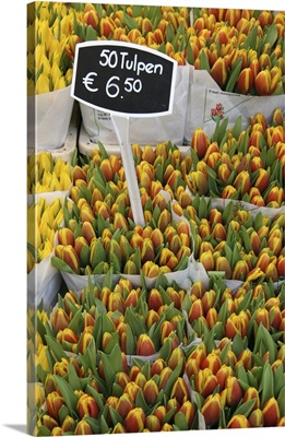 Tulips For Sale In Market, Close Up