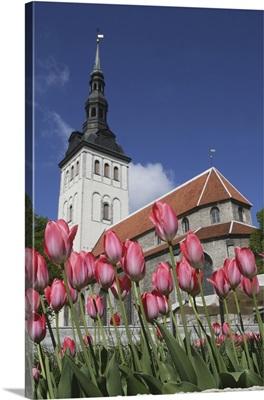 Tulips Outside Niguliste Church, Tallinn, Estonia