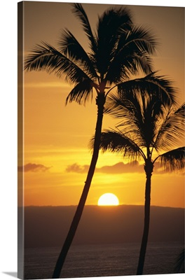 Two Palm Trees Silhouetted At Sunset With Fiery Orange Sun