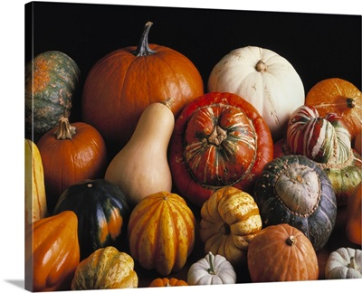 Variety of winter squashes: pumpkins, butternut squash, acorn squash, turban squash