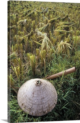 Vietnamese Conical Hat And Rice Cutting Tool In Field, Vietnam