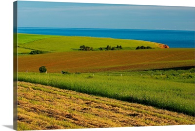 View Of Farmer's Fields And Gulf Of Saint Lawrence, Prince Edward Island, Canada