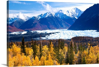 View of Matanuska Glacier with golden autumnal Aspen trees in the foreground