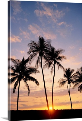 View Of Palm Trees At Sunset, Pale Blue Sky, Wispy Clouds