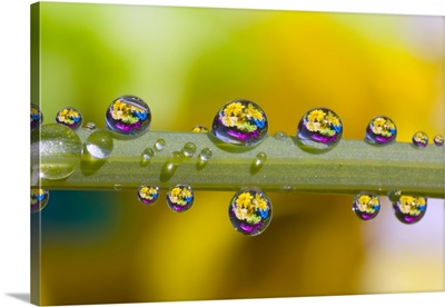 Water Drops On A Flower Stem
