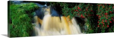 Waterfall And Fuschia, Ireland