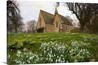 White Flowers With A Small Church In Background, Northumberland, England