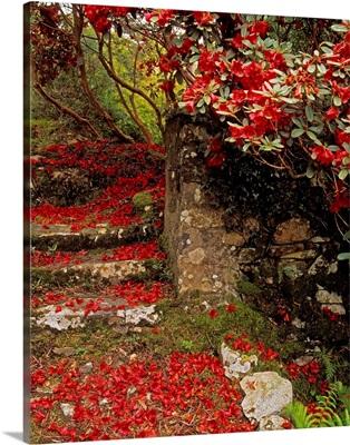 Wild Garden, Rowallane Garden, County Down, Ireland