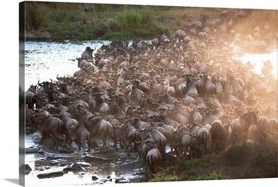Wildebeest, Kenya, Africa