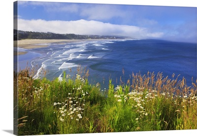 Wildflowers Along Yaquina Head; Newport, Oregon, USA