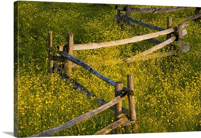 Wildflowers And A Wooden Fence At Sunset; Fulford, Quebec, Canada