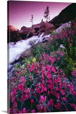 Wildflowers, Bugaboo Provincial Park, British Columbia, Canada